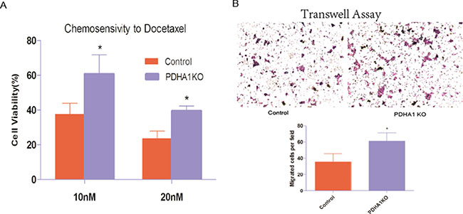 Chemotherapy sensitivity and migration ability.