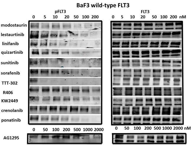 Inhibition of wild-type FLT3 signaling pathways by FLT3 TKI.