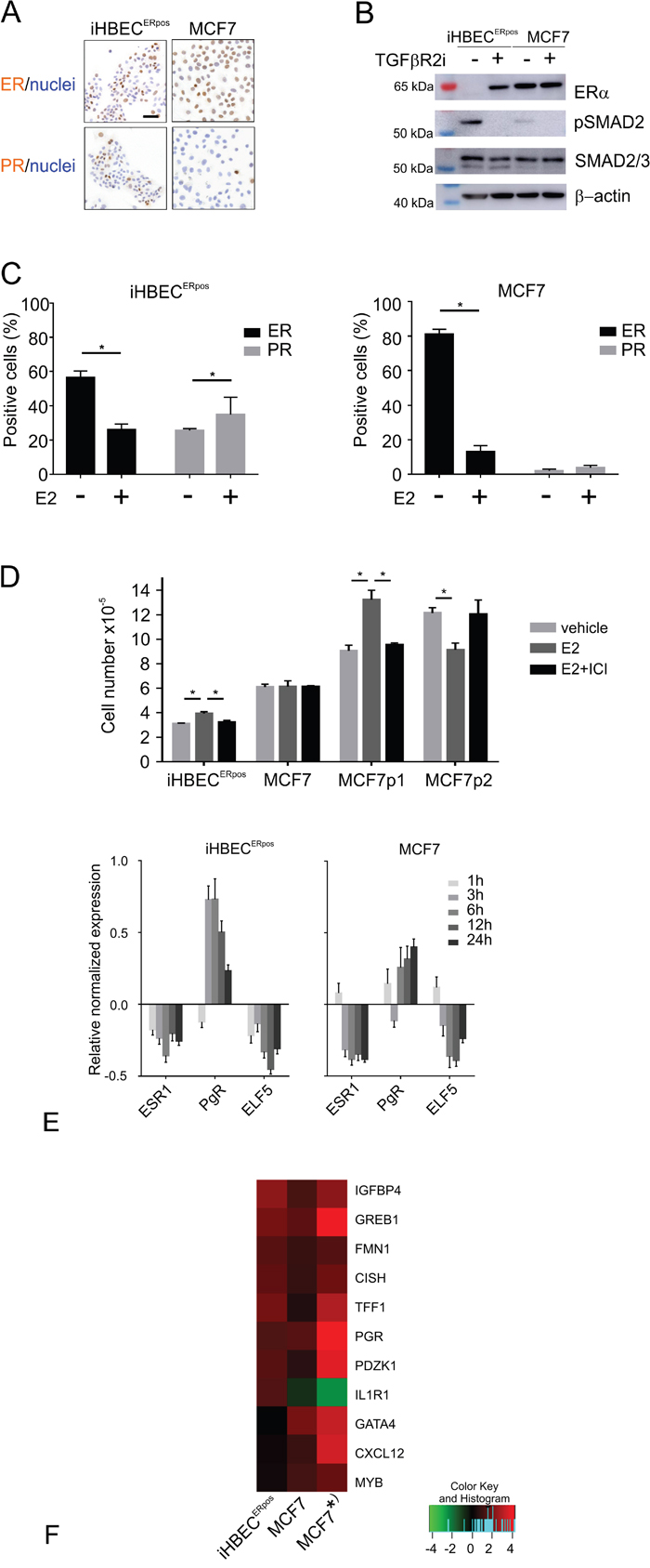 iHBECERpos and MCF7 cells respond differently to TGFβR inhibitors and estrogen.