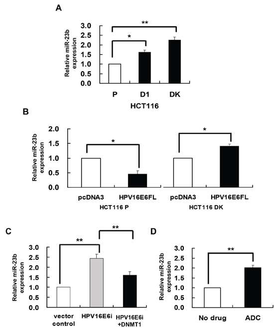 DNMT1 mediated the HPV-16 E6 suppression of miR-23.