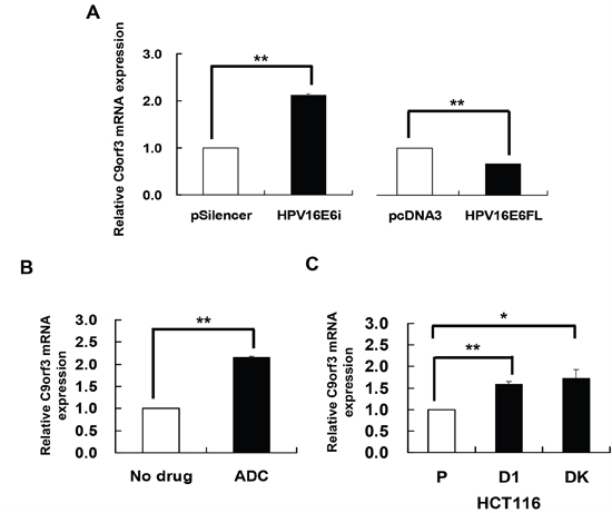 HPV-16 E6 silencing and DNA demethylation increased the expression of C9orf3 mRNA.