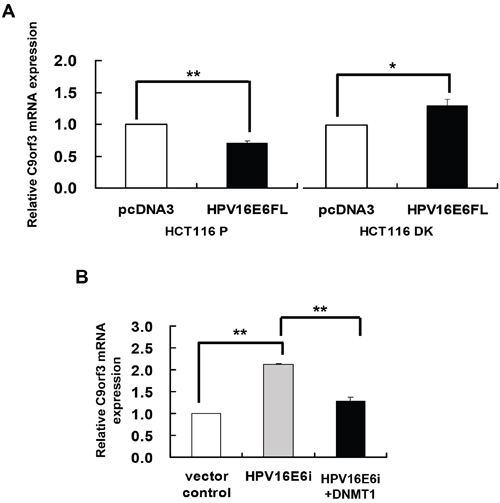 DNMT1 mediated the HPV-16 E6 suppression of C9orf3 mRNA expression.