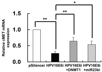 DNMT1 and miR-23b mediated the effect of HPV-16 E6 knockdown on c-MET mRNA expression in SiHa cells.
