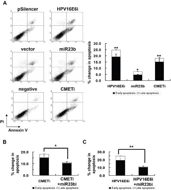 The effect of HPV-16 E6, miR-23b and c-MET on apoptotic cell death of SiHa cells.