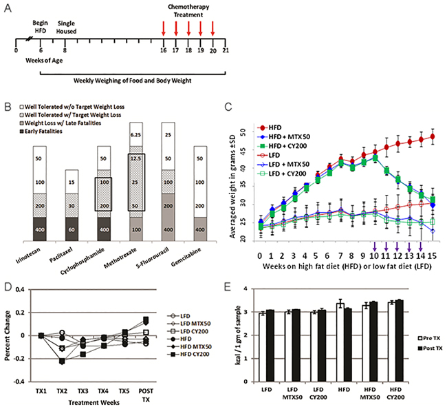 Intermediate chemotherapy dosing fully normalizes body weight of non tumor-bearing obese mice.