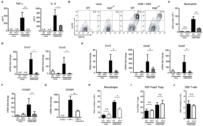 Regulation of neutrophil-recruiting chemokines and VCAM-1 by LMP7 during progression of CAC.