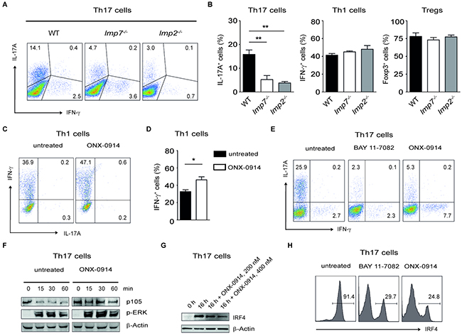 Specific blockade of LMP7 reduces Th17- but not Th1-mediated immune responses.