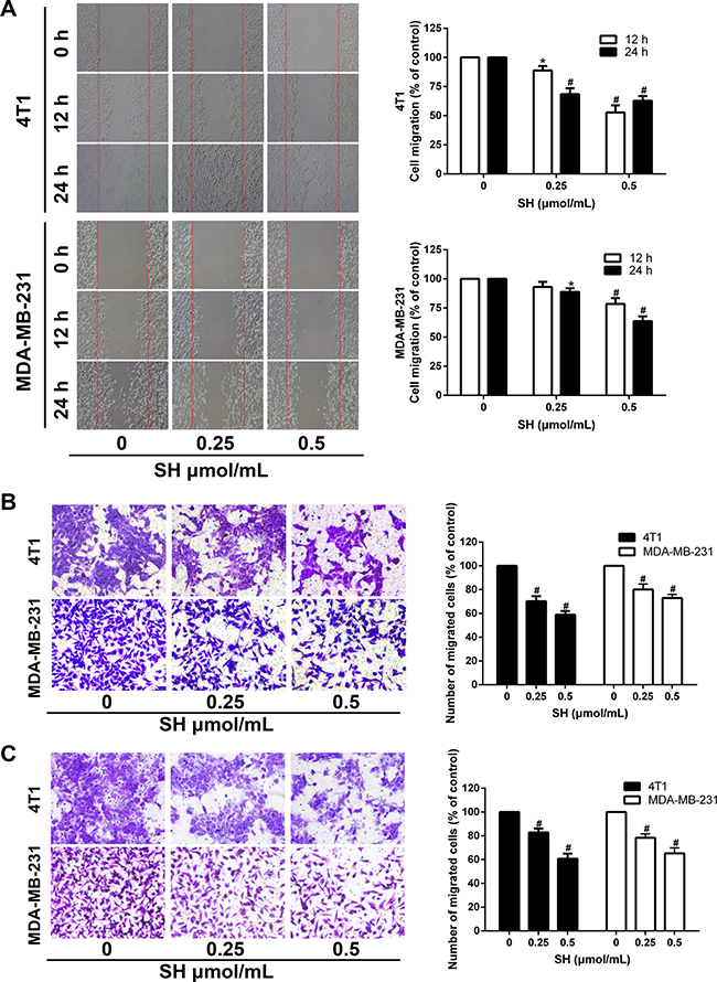 SH impaired the migration and invasion ability of 4T1 and MDA-MB-231 cells.