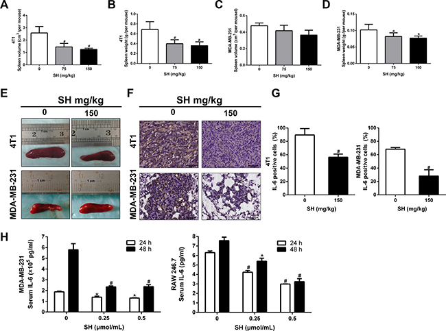 SH attenuated inflammation response elicited by breast cancer cells.