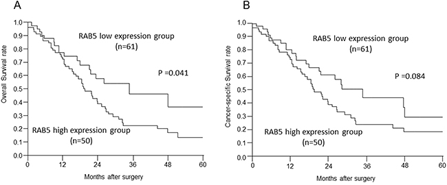 Relationships between postoperative survival and RAB5 and E-cadherin expression.