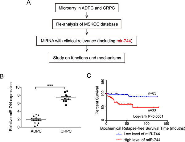 Oncotarget | MicroRNA-744 promotes prostate cancer progression