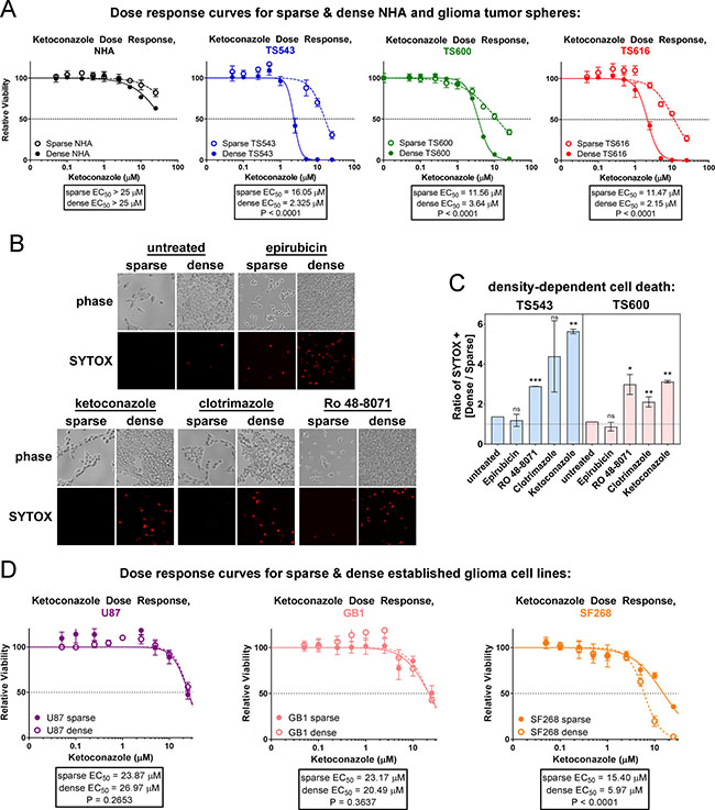Glioma tumor initiating cells are sensitive to cholesterol synthesis inhibitors.