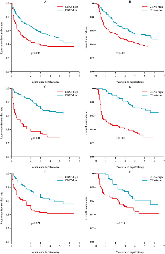 Relationship between CBX6 expression and HCC patient prognosis.