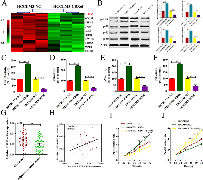 CBX6 increased S100A9 expression, and S100A9 plays a critical role in mediating CBX6 function in HCC.