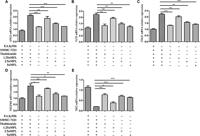 Effects of plumbagin on the mRNA expression of VEGF-A, VEGFR-2, ang2, Tie2, and FLT1 genes in SMMC-7721 cells co-cultured with EA.hy926 cells.