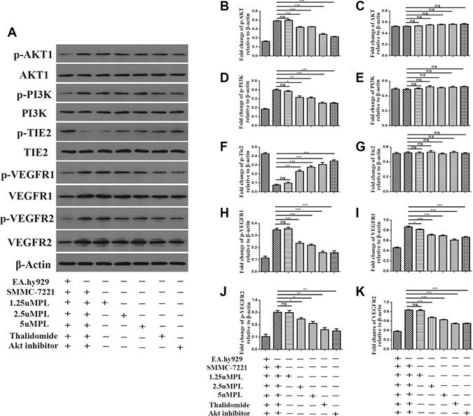 Plumbagin inhibits Angiopoietins through inactivation of p-AKT, AKT1, p-PI3K, PI3K, VEGFR1, VEGFR2, p-vegfr1, p-VEGFR2 and activation of p-TIE2 and TIE2.