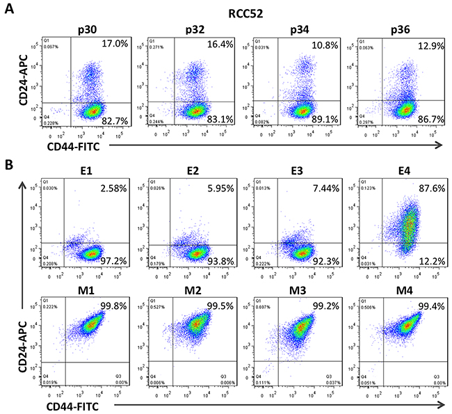 Two color cytofluorometric analysis on RCC52 cells and the clonal sublines.
