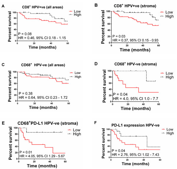 Oncotarget Distinct Patterns Of Infiltrating Cd8 T Cells In Hpv