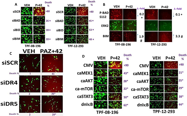 Multiple toxic BH3 domain proteins are required to mediate the death response to [pazopanib + AR42].