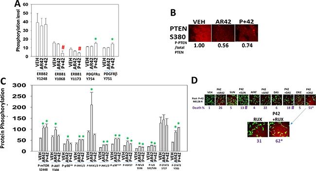 AR42 and [pazopanib + AR42] reduce signaling by ERBB1 and induce signaling through the PDGFR.