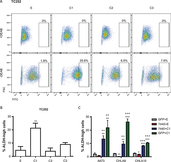 ALDH activity is influenced by C/EBPβ expression.