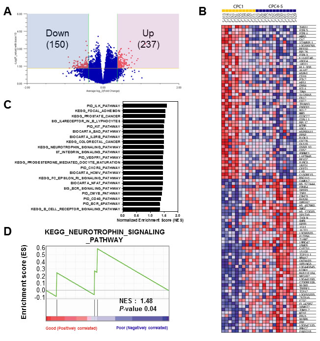 Gene set enrichment analysis of the differentially expressed gene signatures in the CA patients.