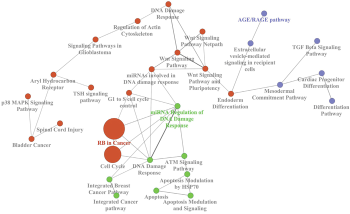 Biological network of the most represented KEGG terms of the deregulated genes in the external dataset E-GEOD-49481.