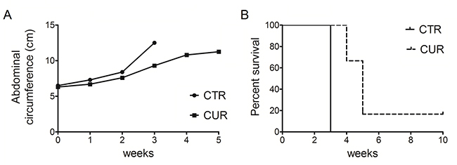 CUR reduced tumor growth and increased the survival in C57BL/6 mice intraperitoneally transplanted with MM #40a cells.