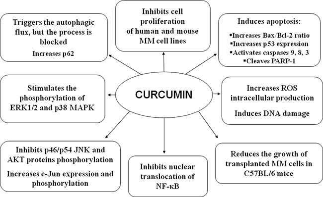 Overall in vitro and in vivo effects of CUR on MM cells.