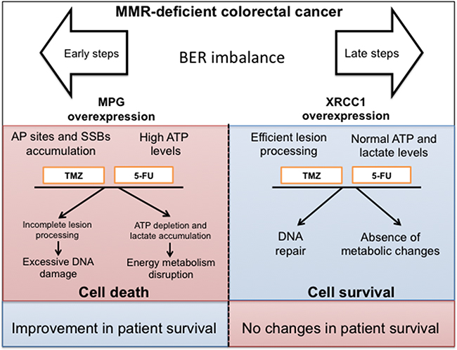 Oncotarget | Base excision repair imbalance in colorectal
