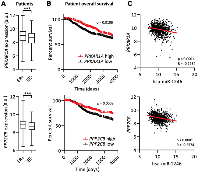 PRKAR1A and PPP2CB are potential tumor-suppressor genes in breast cancer.
