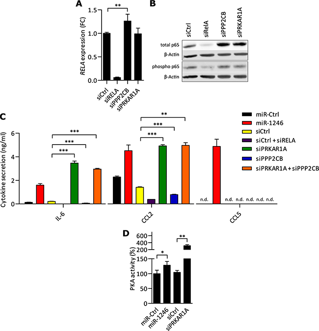 PKA acts pro-inflammatory in MSCs and miR-1246 increases PKA activity.