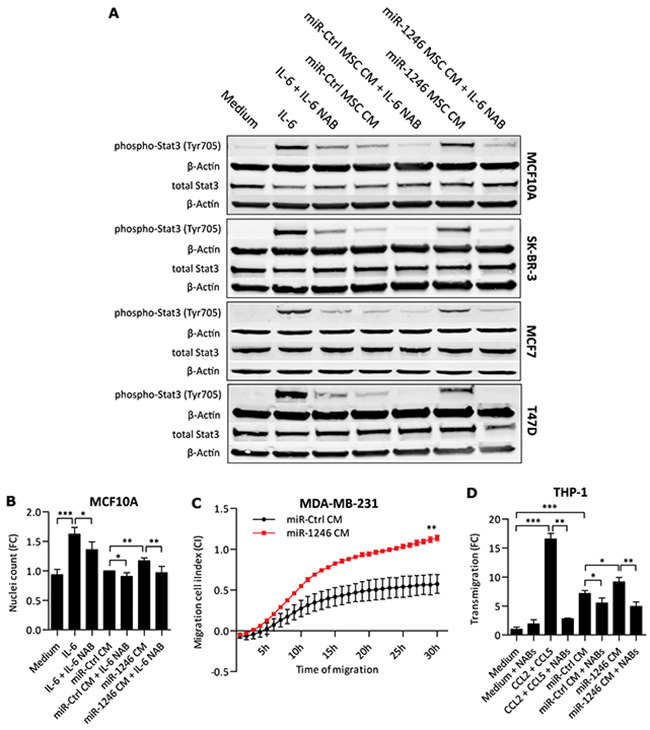 Functional effects of MSC CM on breast cancer cells.