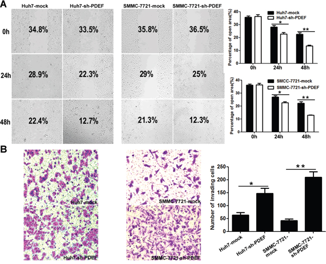 PDEF deficiency enhances cellular mobility and invasion in vitro.
