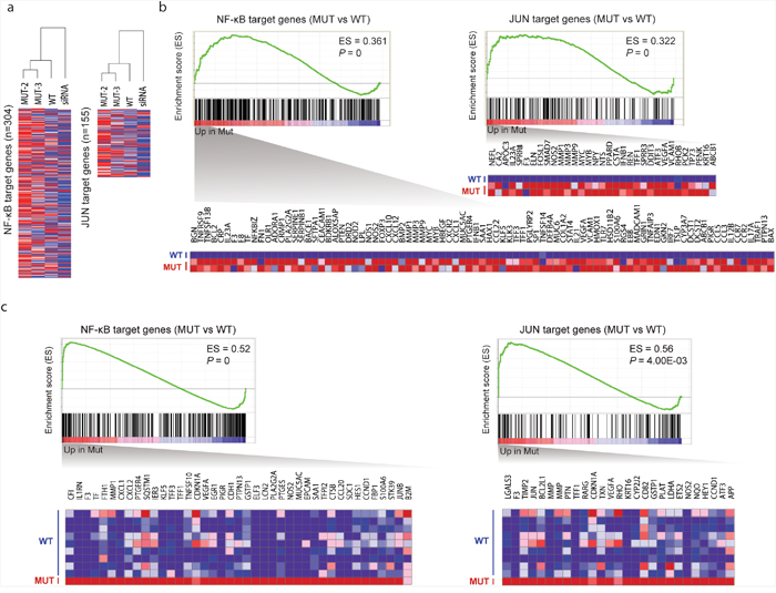 Effects of TBL1XR1 mutations on gene expression.