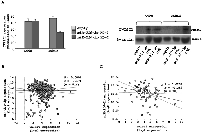 Characterization of TWIST1 as a candidate target of miR-210-3p.