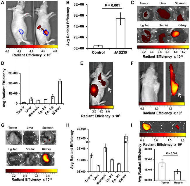 In vivo optical imaging provides JAS239 biodistribution data.