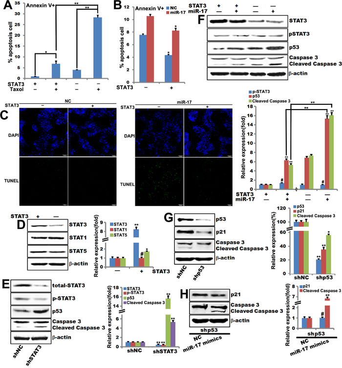 STAT3 is required for miR-17-5p-induced sensitization of breast tumor cells to paclitaxel-induced apoptosis.