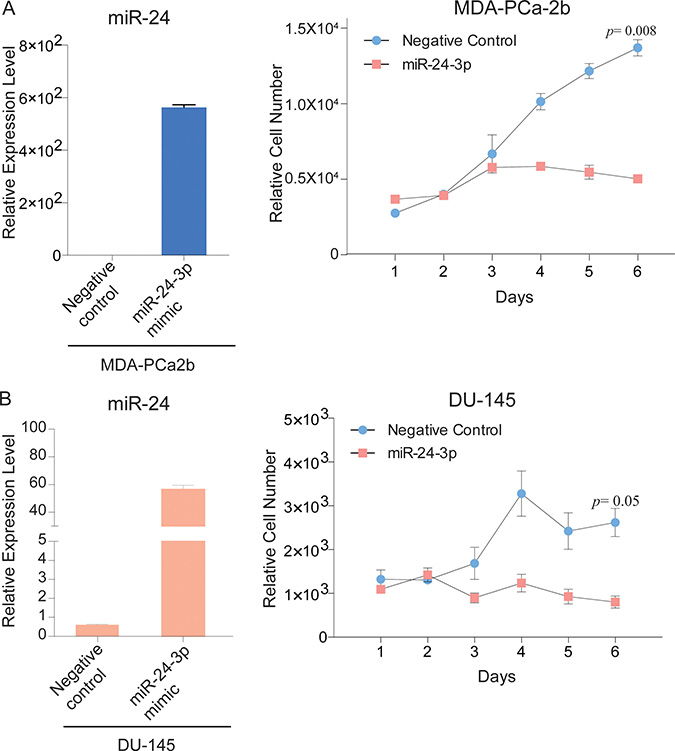miR-24 over-expression decreases PCa cell proliferation.