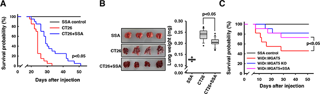 Enhanced survival of CT26 cells-injected mice by SSA co-injection.