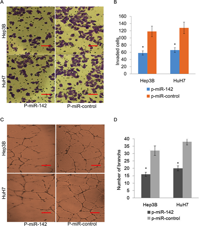 Overexpression of miR-142 inhibits invasion and angiogenesis of HCC cells.
