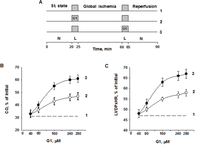 Dose-dependent effect of G1 infusion on functional recovery of isolated rat heart at the end of reperfusion.