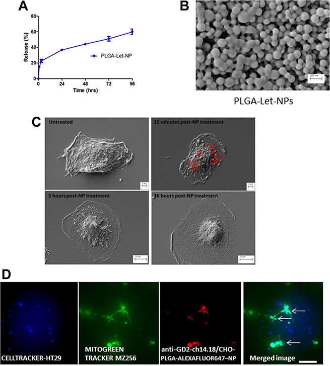 Characterisation of PLGA-Letrozole-NPs and anti-GD2-ch14.18/CHO-PLGA-NP mediated delivery of Letrozole exclusively to GBM cells in co-culture.
