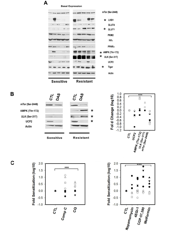 The expression and phosphorylation status of metabolic sensors and transducers in primary CLL lymphocytes is correlated with Dasatinib response.