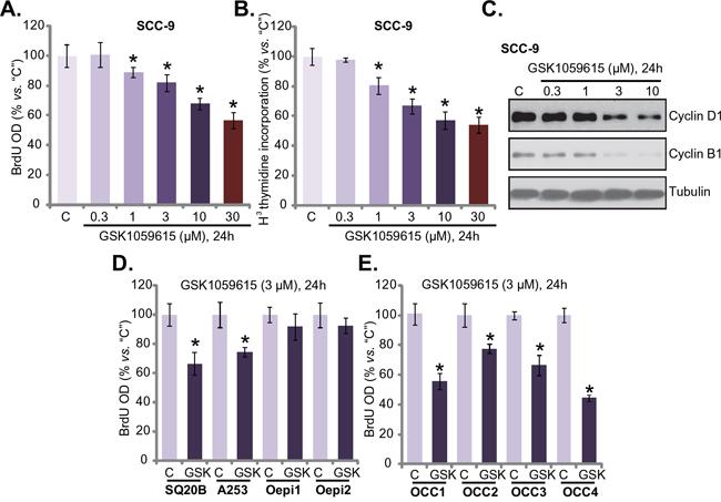 GSK1059615 inhibits HNSCC cell proliferation.