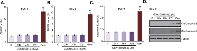 GSK1059615 fails to provoke apoptosis in HNSCC cells.
