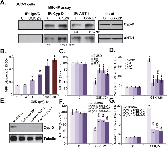 GSK1059615 provokes programmed necrosis in HSNCC cells.