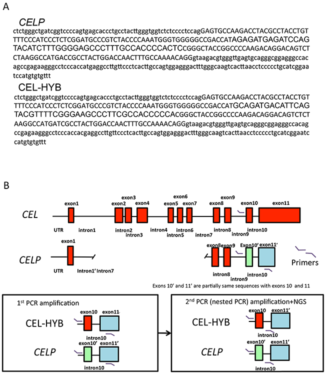Detection of CEL-HYB by next-generation sequencing.