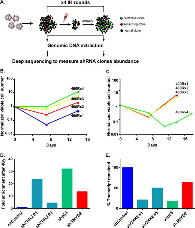 shRNA screen for regulators of leukemia cell survival.
