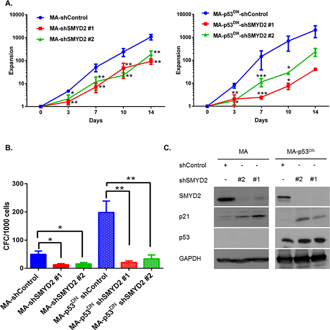 SMYD2 regulates leukemia cell growth in the p53-independent manner.